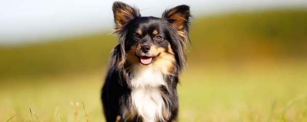 hundefotografie cta