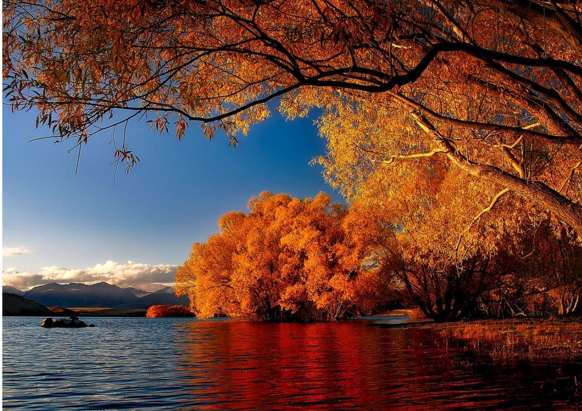 Im Sonnenlicht leuchtende Bäume mit Herbstlaub als Beispiel für Fotoideen für den Herbst