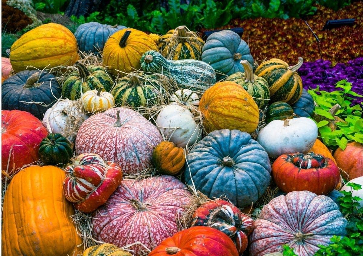 Bunte Kürbisse fotografiert als Fotideen für den Herbst